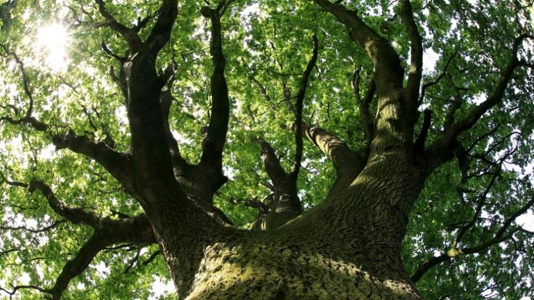 onder een boom