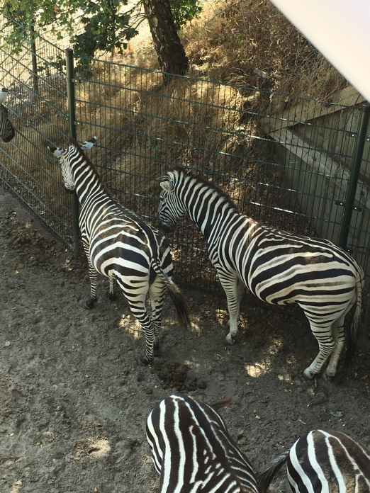zebra's Beekse Bergen