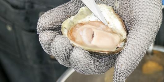 oester in malienkolder hand