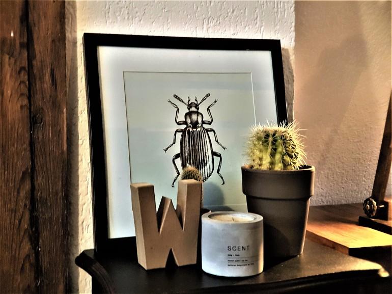 Cactus, kever en letter